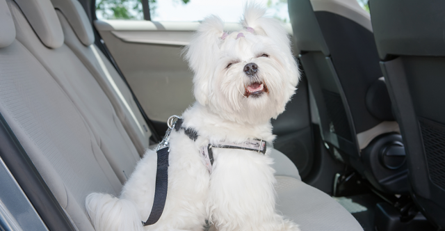 Pointers For Pet Lovers When Dog Is Your Co-Pilot